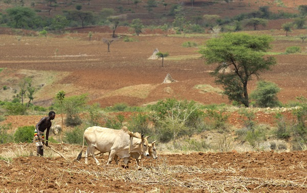 Bauer pflügt sein Land mit seinen Kühen in der Nähe von Konso in Südäthiopien.