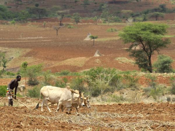 Ein Kleinbauer pflügt sein Feld in Äthiopien.