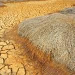 Folgen von Klimawandel und falscher Bodenbearbeitung: Trockenheit reduziert die Ernteerträge | Bild (Ausschnitt): © Hoxuanhuong [All rights reserved] - Dreamstime.com