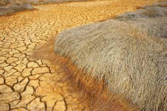 Folgen von Klimawandel und falscher Bodenbearbeitung: Trockenheit reduziert die Ernteerträge  | Bild: © Hoxuanhuong [All rights reserved]  - Dreamstime.com
