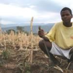 Dürre in Äthiopien-ein Kleinbauer auf seinem Feld. Dürre in Äthiopien-ein Kleinbauer auf seinem Feld. | Bild (Ausschnitt): © USAID Africa Bureau [Public Domain] - wikimedia commons