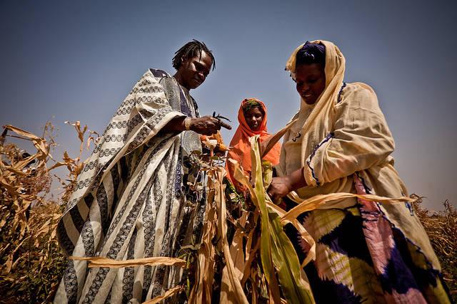 Mais Ernte Afrika  | Bild: ©  Oxfam International [CC BY-NC-ND 2.0]  - flickr