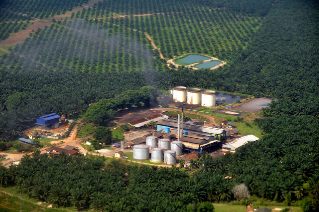 Palmölfabrik