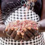 Agriculture Kenia | Bild (Ausschnitt): © Mwangi Kirubi [CC BY-NC 2.0] - flickr