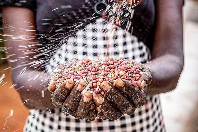 Agriculture Kenia  Bild: ©  Mwangi Kirubi [CC BY-NC 2.0]  - flickr