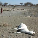 Dürre in Äthiopien Bereits 2006 suchte eine verheerende Dürreperiode die Oromia-Region in Äthiopien heim | Bild (Ausschnitt): © Andrew Heavens [CC BY-NC-ND 2.0] - flickr