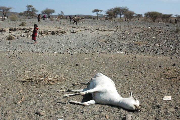 Dürre in Äthiopien Bereits 2006 suchte eine verheerende Dürreperiode die Oromia-Region in Äthiopien heim |  Bild: © Andrew Heavens [CC BY-NC-ND 2.0]  - flickr