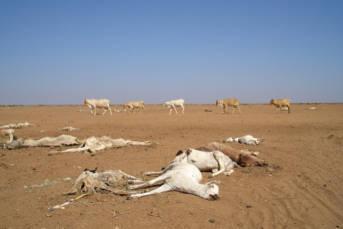 Dürre in Kenia  | Bild: © Oxfam International [CC BY-NC-ND 2.0]  - Flickr