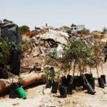 Zerstörte beduinische Siedlung Zerstörte beduinische Siedlung - Hier soll zukünftig ein Waldgebiet entstehen | Bild (Ausschnitt): © Tal King [CC BY-NC 2.0] - Flickr