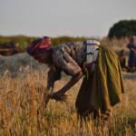 Erntehelferin Äthiopien | Bild (Ausschnitt): © Synergos Institute [CC BY 2.0] - Flickr.com