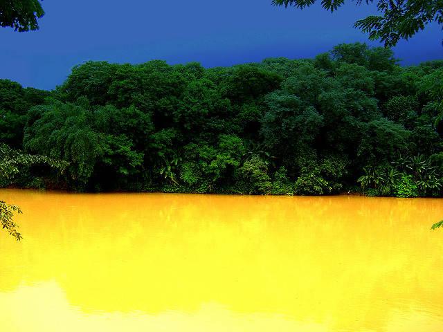 Regenwald Brasilien Regenwald Brasilien |  Bild: © Jose Roberto V Moraes  [CC BY 2.0]  - Flickr
