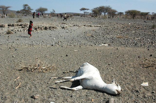 Trockenheit in der Oromia-Region