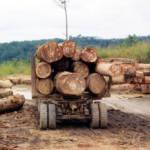Zentralafrikanische Republik- Holztransport Tropenhölzer finanzieren die Rebellen in der Zentralafrikanischen Republik | Bild (Ausschnitt): © JG Collomb [CC BY 2.0] - Wikicommons