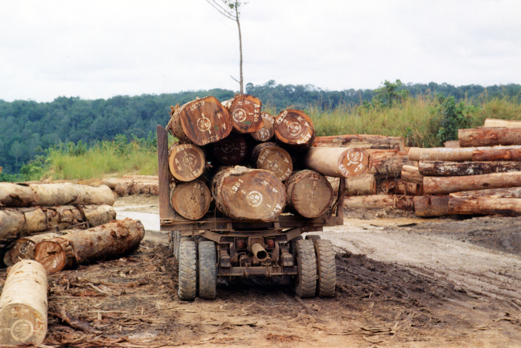 Zentralafrikanische Republik- Holztransport