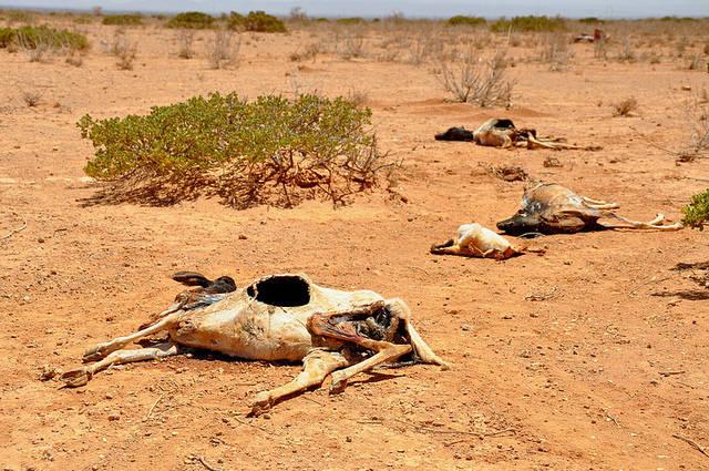 Der Wassermangel in Ostafrika Der Wassermangel führt zum Viehsterben. |  Bild: ©  Oxfam International [CC BY-NC-ND 2.0]  - flickr