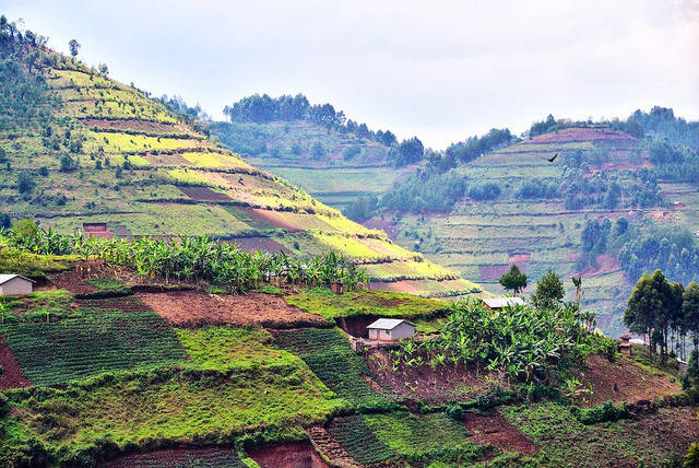 Anbauflächen Agrarflächen nach Abholzung des Waldes |  Bild: © Rod Waddington [CC BY-SA 2.0]  - Flickr