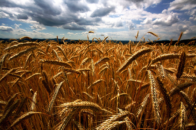 Getreidepreisspekulation