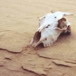 Auf dem Weg durch die Sahara sterben Schätzungen zufolge doppelt so viele Menschen wie auf dem Mittelmeer | Bild (Ausschnitt): © YXO [CC BY-ND 2.0] - Flickr