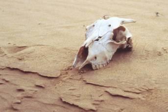 Auf dem Weg durch die Sahara sterben Schätzungen zufolge doppelt so viele Menschen wie auf dem Mittelmeer | Bild: © YXO [CC BY-ND 2.0]  - Flickr