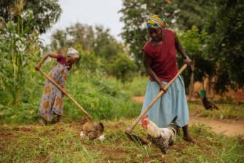 Viele Kleinbauern in Afrika können mit den billigen Produkten aus Europa nicht mithalten.  | Bild: © IFPRI -IMAGES [CC BY-NC-ND 2.0]  - Flickr