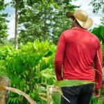 Kleinbauern gibt es in Brasilien immer weniger - riesige Flächen sind bereits in Besitz internationaler Agrarkonzerne | Bild (Ausschnitt): © CIFOR [CC BY-NC-ND 2.0] - flickr