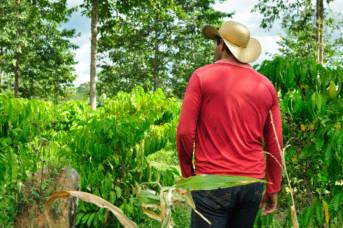 Kleinbauern gibt es in Brasilien immer weniger - riesige Flächen sind bereits in Besitz internationaler Agrarkonzerne | Bild: ©  CIFOR [CC BY-NC-ND 2.0]  - flickr