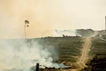 Der Anbau von Ölpalmen in Indonesien ist für private Großkonzerne ein lukratives Geschäft | Bild: © Rainforest Action Network [CC BY-NC 2.0]  - Flickr