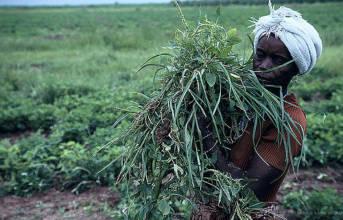 Frau in Nigeria  |  Bild: © World Bank Photo Collection [CC BY-NC-ND 2.0]  - flickr
