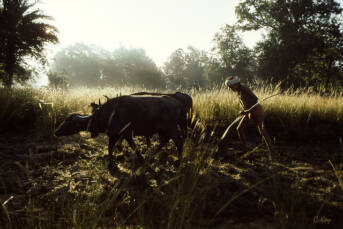 Viele indigene Völker in Indien fürchten, ihre Heimat zu verlieren |  Bild: © Collin Key [CC BY-NC-ND 2.0]  - flickr