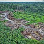 Amazonas Abholzung Der Amazonas-Regenwald brennt aufgrund von Abholzung. Pirititi, Brasilien | Bild (Ausschnitt): © Karl-Ludwig Poggemann [ (CC BY 2.0) ] - flickr