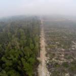 Abholzung des Regenwaldes zugunsten von Palmölplantagen in Indonesien | Bild (Ausschnitt): © GLOBAL 2000 [CC BY-ND 2.0] - flickr
