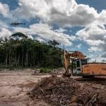 Abholzung des brasilianischen Regenwaldes | Bild (Ausschnitt): © Ibama [CC-BY-SA-2.0] - Wikimedia commons